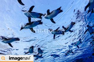 【東京都】豊島区 サンシャインシティ水族館 空飛ぶペンギン