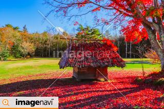 【山梨県】紅葉の西湖野鳥の森公園