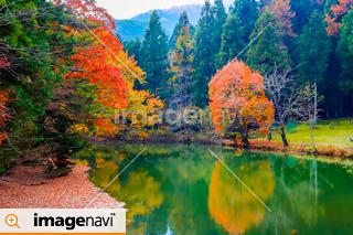 【山梨県南アルプス市】ユネスコエコパーク・紅葉の菖蒲池