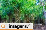【東京都】秋の都立庭園・特別名勝・六義園の竹林