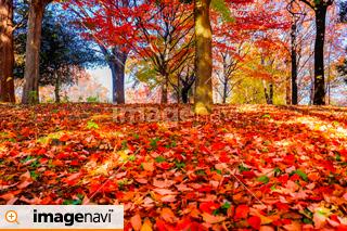 公園の落ち葉と紅葉の木々