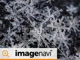 降り積もった雪の結晶のアップ